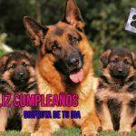 Mejores imágenes de cumpleaños para los amantes de los perros